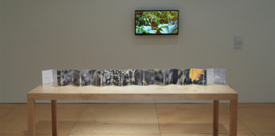 Displayed along a table is an accordion book with one whole side being a panorama of a garden, while the opposing side an outline of the geographic lands of planet Earth..On the wall adjacent to the accordion, is a video that is a documentation of moving plants accompanied by the sounds of wildlife.