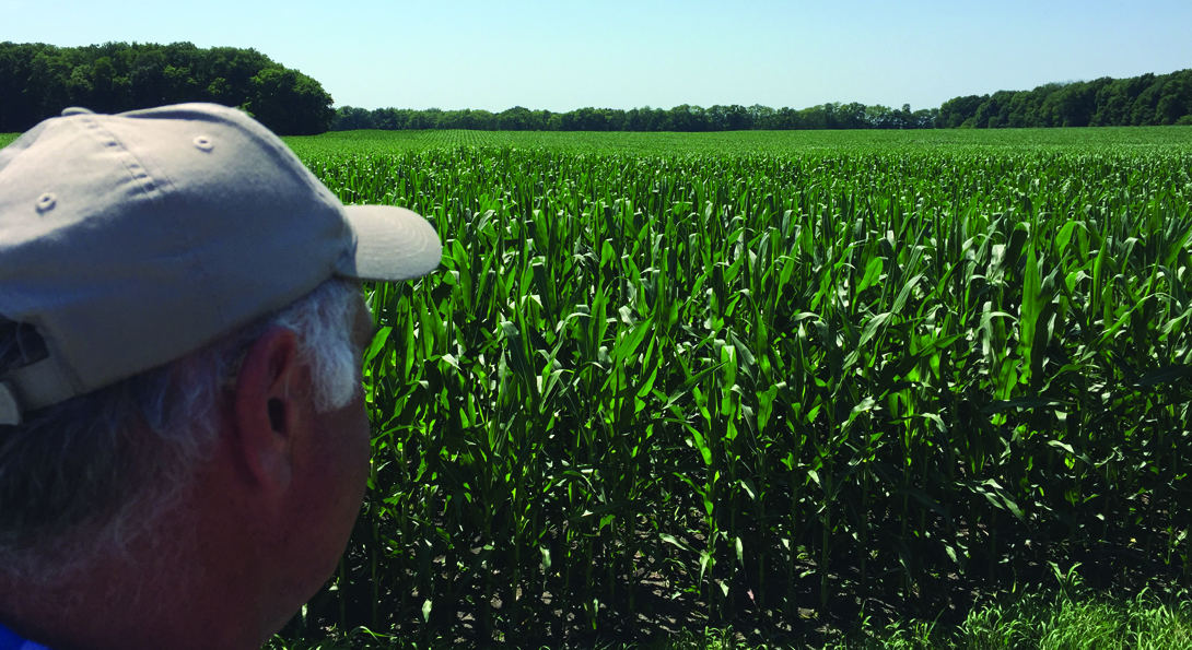 A photograph of a corn farm field. The field is a bright green color, and the corn plants are half grown. There is a person on the left side of the image, pictured shoulders above. They look into the distance of the field, and only the side of their face is visible. They are wearing a light- tan hat.